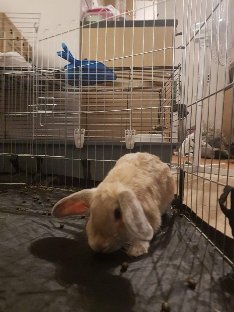 Rabbit lifestyle & health
