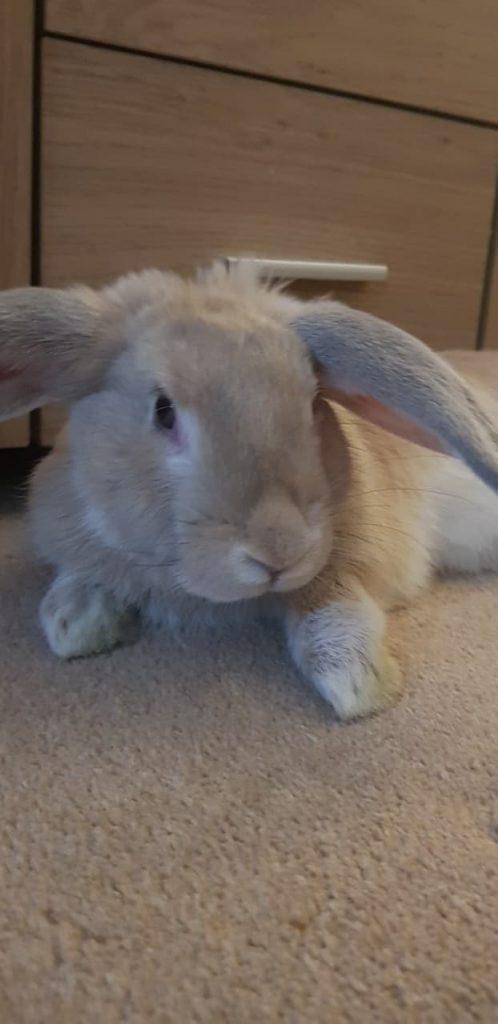 Rabbits Health & Nutrition