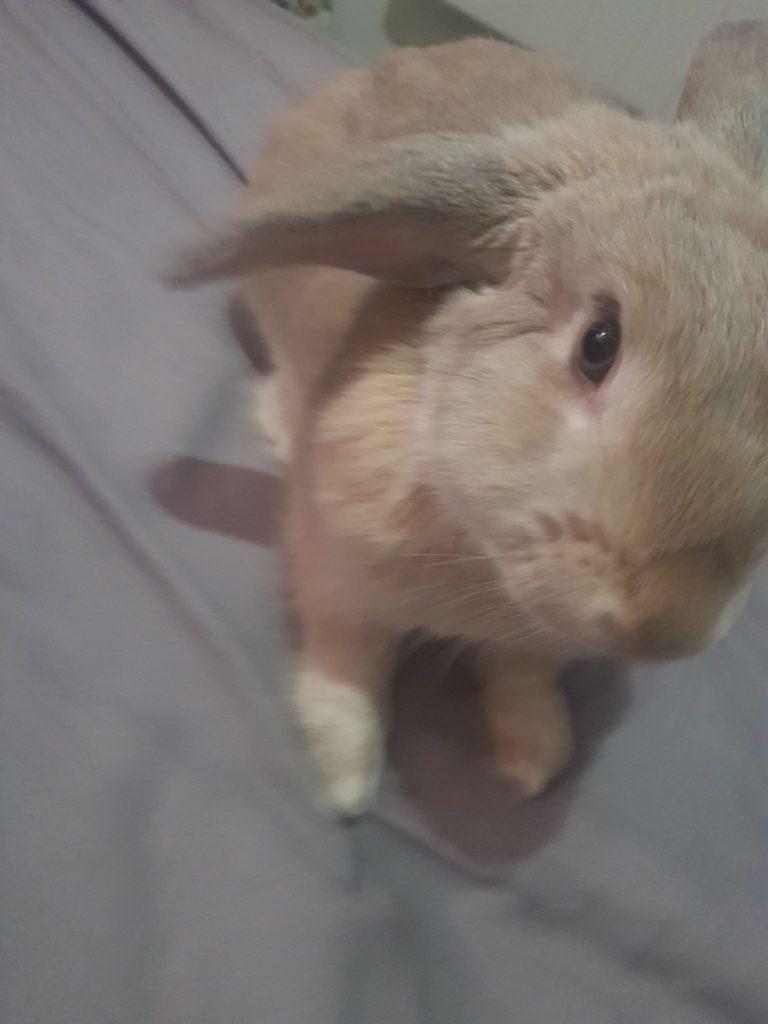 Rabbit toys & Enrichment